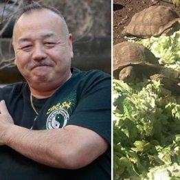 丸山ケヅメリクガメ生態研究所所長の丸山久雄さん、趣味はボディービル