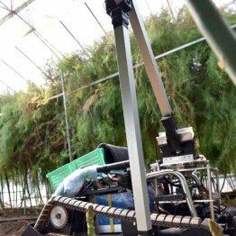 AI農業は着々と実用化 ロボットが収穫した野菜が店頭に