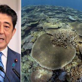 """""""第2のサンゴ虚報事件""""で思い出す安倍首相の朝日新聞批判"""