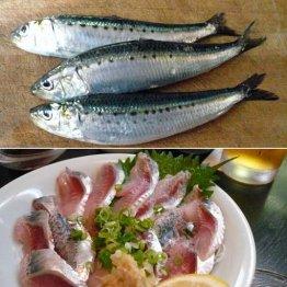 庶民の魚マイワシ 基本は手開きも鮮度抜群の極上は包丁で