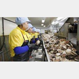 4月から最大34万人の外国人労働者(C)共同通信社