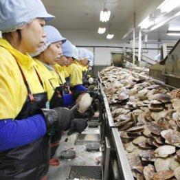 4月から最大34万人の外国人労働者