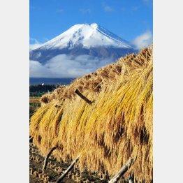 農地価格は田んぼで1反平均120万円(C)共同通信社