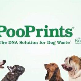 """犬のフン放置は許しません! DNA技術で""""犯人""""を罰金に"""