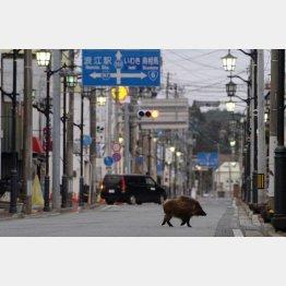 金町避難を強いられた挙句(福島・浪江島=2016年3月撮影)/(C)共同通信社