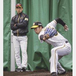 ブルペンで青柳の投球練習を見守る矢野監督(C)共同通信社