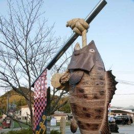 和歌山県日高町で幻の高級魚「クエ」の上品な甘みを味わう