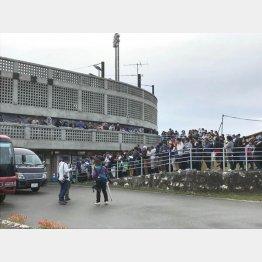 読谷平和の森球場に集まる大勢のファン(C)日刊ゲンダイ