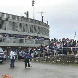 根尾目当てにファン600人 中日コーチ悲鳴「球場が沈む…」