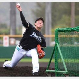 打撃投手としてマウンドに上がった吉田輝星(C)日刊ゲンダイ