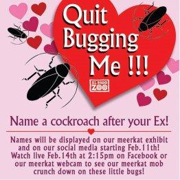 あなたの元カレの名前をゴキブリに付けて動物の餌にします