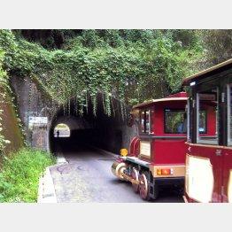 神奈川県横浜市の「こどもの国のトンネル」/(提供写真)