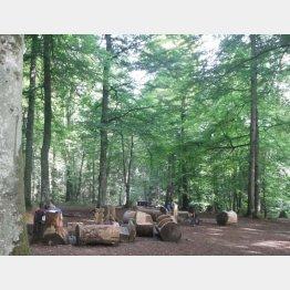 スイスの森林(撮影・田中淳夫)