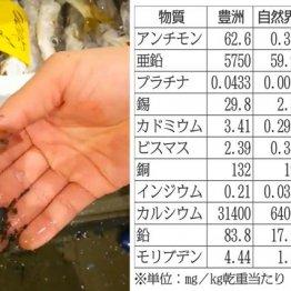 """健康被害が続出 豊洲市場の""""黒い粉塵""""は高濃度の猛毒物質"""