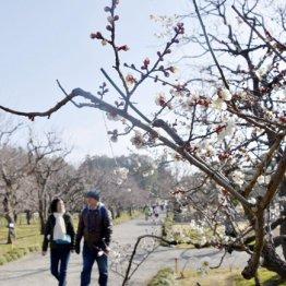 中高年こそ使いたい 春旅行は「青春18きっぷ」で途中下車