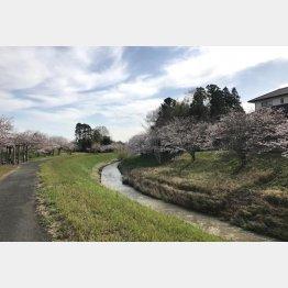 自然豊かな風景が広がる睦沢町(提供写真)