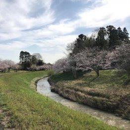 自然豊かな風景が広がる睦沢町