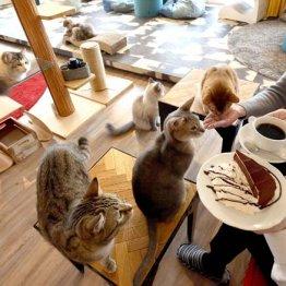 浅草「MONTA」激戦の猫カフェで開業5年目…長続きの秘訣は