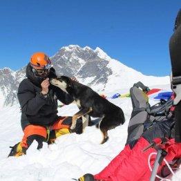 どうやって崖を?世界で最も高い所に登った野良犬に熱視線