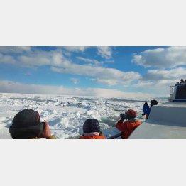羅臼港から10分~15分で流氷が見える(C)日刊ゲンダイ