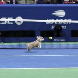 「全米オープン・テニス」の公式ツイッターから(C)日刊ゲンダイ
