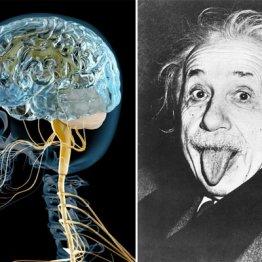 """脳の重さは関係ナシ """"東大脳""""と""""ボンクラ脳""""の違いはココ"""