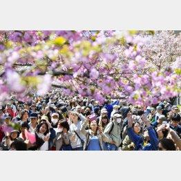 大阪市造幣局の「桜の通り抜け」を楽しむ人たち(C)共同通信社