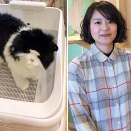 おしっこで健康管理 猫好き喜ぶハイテクトイレの機能とは
