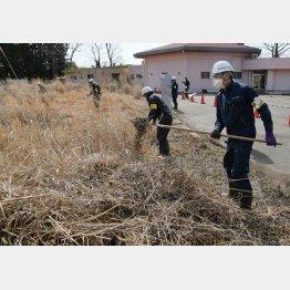 福島県大熊町、復興拠点で懸命に除染を行う作業員(C)共同通信社