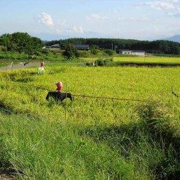 田んぼは観光資源 外国人観光客が泊まりたくなる工夫とは