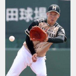 投手強襲のゴロをさばく吉田輝星(C)日刊ゲンダイ