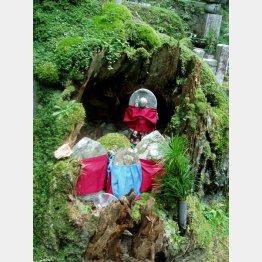 高野山奥の院参道(提供写真)