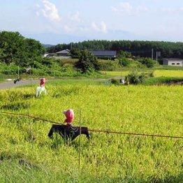 【耕地】日本農業の深刻さ 後継者不足で東京都8個分が減少