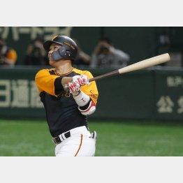 坂本勇が2本塁打(C)日刊ゲンダイ