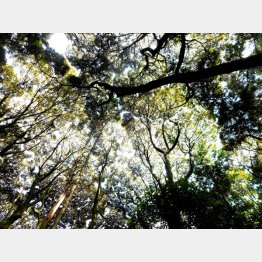鎮守の森 (提供写真)