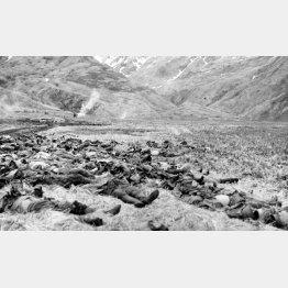 アリューシャン列島アッツ島で集団自決した日本軍兵士の遺体=1944年3月(C)共同通信社