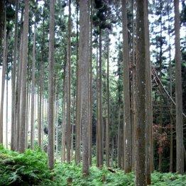 天然林だけじゃない 人工林ならではの「美」を見つけよう