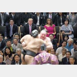 千秋楽を観戦する(上左から)安倍首相、トランプ大統領、メラニア夫人、昭恵夫人(代表撮影)