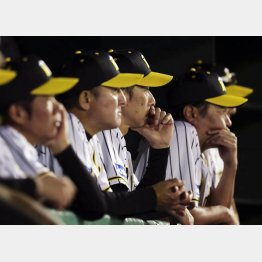矢野監督(左から3人目)も厳しい表情(C)共同通信社