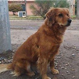 飼い主逮捕され 警察前で1年待ち続けるアルゼンチンの忠犬