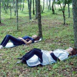 森林浴と森林療法そして森林セラピー その目的や違いは?