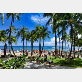 常夏のハワイ