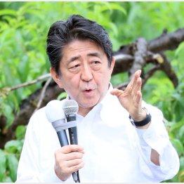 ペテン(C)日刊ゲンダイ