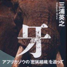 日本の印鑑のために約72万頭のアフリカゾウが密猟