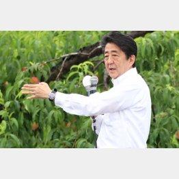 安倍首相が争点化もくろむ「憲法改正」は低迷(C)日刊ゲンダイ