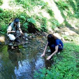 渓流沿いで癒やされる 水音の心地よさは「1/fのゆらぎ」