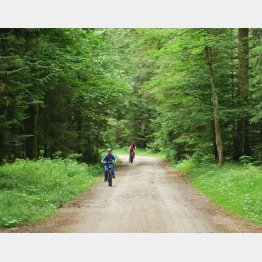 美しい森には人も集まる(提供写真)