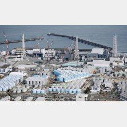 福島第1原発に立ち並ぶ汚染水が入ったタンク(C)共同通信社