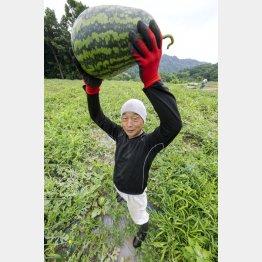 「寿風土ファーム」の小林栄一さんと「戦水甘(せんすいかん)」シリーズのラグビーボールのようなスイカ(提供写真)