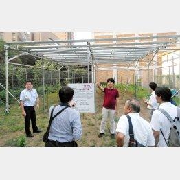 千葉商大のソーラーシェアリング。8月1日に開催された「次世代農業エネルギー研究会」に参加した専門家や実践者が現場見学(C)日刊ゲンダイ